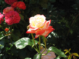 Клуб цветоводы москвы заказы роз доставка цветов в пензенской области