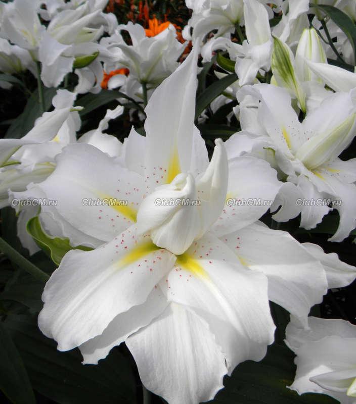 Заказ растений в клубе цветоводы москв заказ цветов челябинск с доставкой