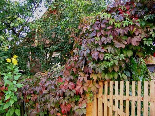 Многолетние растения для сада фото